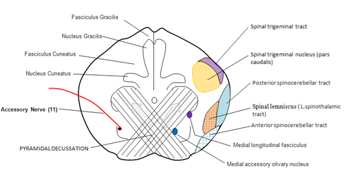 Neuroanatomy: Mcq Neuroanatomy